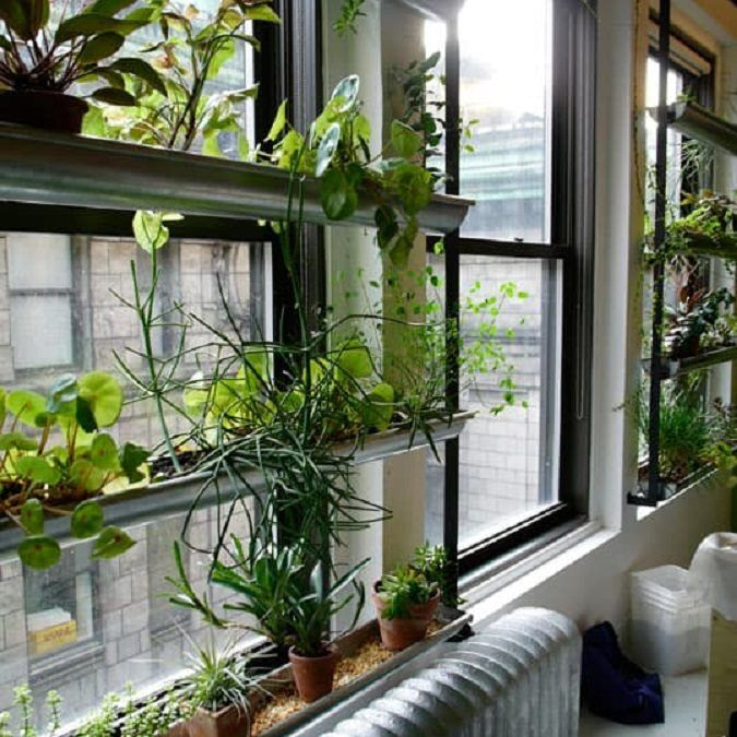 Decoració amb vegetació