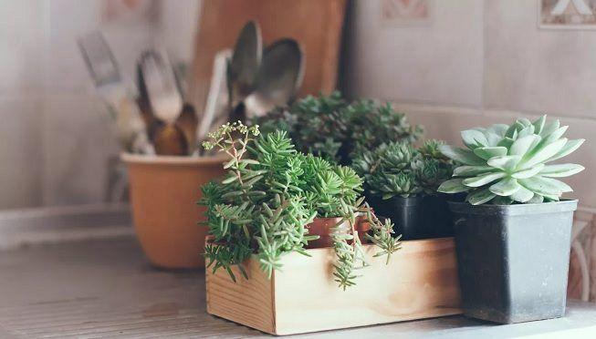 Planta en cocina