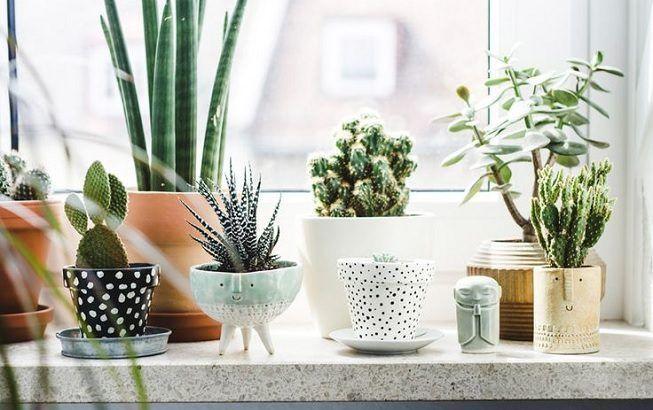 Plantas suculentas para la cocina
