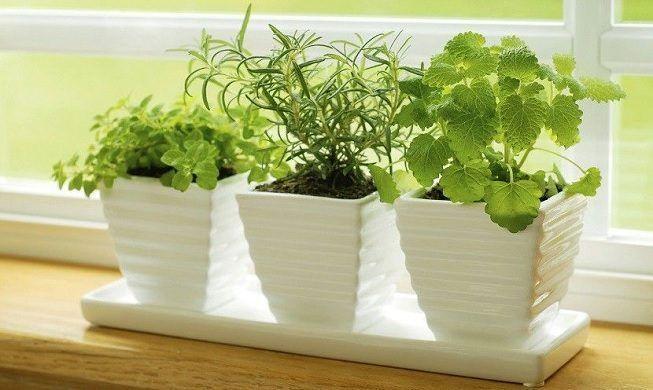 Plantas aromáticas para la cocina