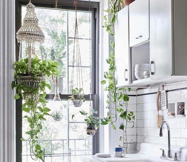 Plantas colgantes para la cocina