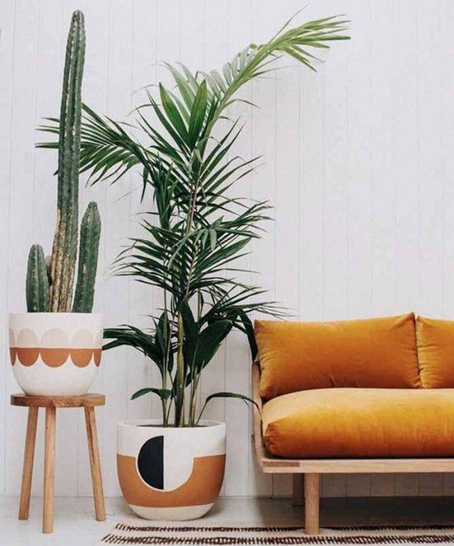 Plantas en hogar para aumentar decoración