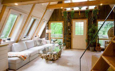 5 plantas para decorar el interior de tu casa